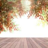 Το όμορφο φθινόπωρο αφήνει το πλαίσιο με τον ήλιο ελαφρύ και κενό ξύλινο BO Στοκ φωτογραφία με δικαίωμα ελεύθερης χρήσης