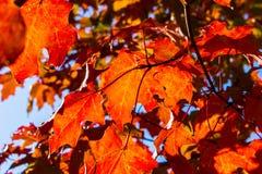 Το όμορφο φθινόπωρο βγάζει φύλλα σε Miaine στοκ φωτογραφία με δικαίωμα ελεύθερης χρήσης
