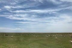 Το όμορφο φυσικό τοπίο Qinghai, που βρίσκεται στα βορειοδυτικά της Κίνας στοκ φωτογραφία με δικαίωμα ελεύθερης χρήσης