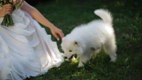 Το όμορφο fiancee παίζει χαρωπά με λίγο αστείο σκυλί απόθεμα βίντεο