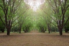 Το όμορφο treeline καλύπτει τον τρόπο Στοκ Φωτογραφία