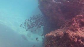 Το όχημα αποκομιδής απορριμμάτων Vanikoro ψαριών απόθεμα βίντεο