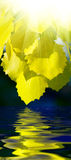 το ύδωρ φύλλων Στοκ Εικόνες