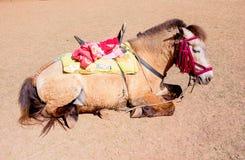 Το ύπνος κουρασμένο άλογο με τη σέλα στον ήλιο λάμπει στοκ φωτογραφίες με δικαίωμα ελεύθερης χρήσης