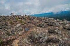 Το δύσκολο κουμπί στρώμα βράχου εμφανίζεται φυσικά στο natio kra Phu hin rong Στοκ εικόνες με δικαίωμα ελεύθερης χρήσης