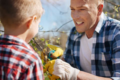 Το ώριμο άτομο διδάσκει το γιο πώς να κλαδεψει τα δέντρα Στοκ εικόνες με δικαίωμα ελεύθερης χρήσης