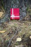 Το δώρο βρίσκεται κάτω από το δέντρο Στοκ φωτογραφίες με δικαίωμα ελεύθερης χρήσης
