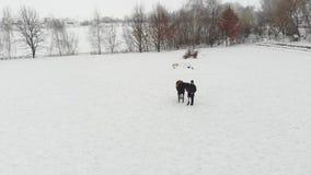 Το Aero, τοπ άποψη, χειμώνας, με ειδικές ανάγκες άτομο στέκεται κοντά στο μαύρο άλογο στο χιονώδη τομέα έχει την πρόσθεση αντί το απόθεμα βίντεο