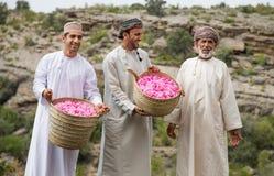 Το Al Akhdar Jabal αυξήθηκε επιλέγοντας Στοκ Φωτογραφία