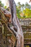 το angkor Καμπότζη συγκεντρώνε Στοκ Εικόνες