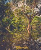 το angkor Καμπότζη συγκεντρώνε Στοκ εικόνα με δικαίωμα ελεύθερης χρήσης