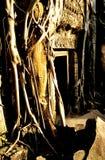 το angkor που εισβάλλεται prohm &kappa Στοκ Εικόνες