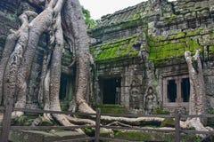 Το Angkor Wat, ναός TA Prohm, Siem συγκεντρώνει, Καμπότζη Στοκ εικόνες με δικαίωμα ελεύθερης χρήσης