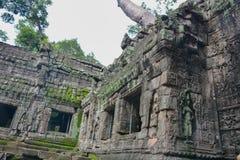 Το Angkor Wat, ναός TA Prohm, Siem συγκεντρώνει, Καμπότζη Στοκ φωτογραφία με δικαίωμα ελεύθερης χρήσης