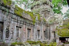 Το Angkor Wat, ναός TA Prohm, Siem συγκεντρώνει, Καμπότζη Στοκ Φωτογραφίες