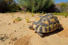 Το Angulate - Νότια Αφρική Στοκ φωτογραφία με δικαίωμα ελεύθερης χρήσης