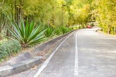 Το angustifolia αγαύης/Marginata/ο καραϊβικός κάκτος αγαύης είναι πλησίον Στοκ Εικόνες