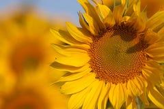 το AP κλείνει το λουλούδι Στοκ Εικόνα