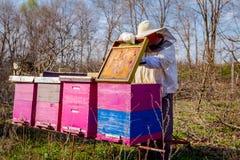 Το Apiarist κάνει την κατάσταση ελέγχου άνοιξη στην αποικία μελισσών Στοκ Εικόνες