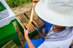 Το Apiarist, μελισσοκόμος ελέγχει τις μέλισσες στο κυψελωτό ξύλινο πλαίσιο Στοκ φωτογραφίες με δικαίωμα ελεύθερης χρήσης