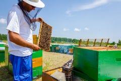 Το Apiarist, μελισσοκόμος ελέγχει τις μέλισσες στο κυψελωτό ξύλινο πλαίσιο Στοκ Φωτογραφία