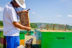 Το Apiarist, μελισσοκόμος ελέγχει τις μέλισσες στο κυψελωτό ξύλινο πλαίσιο Στοκ Φωτογραφίες