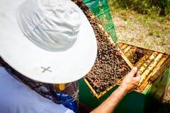 Το Apiarist, μελισσοκόμος ελέγχει τις μέλισσες στο κυψελωτό ξύλινο πλαίσιο Στοκ εικόνα με δικαίωμα ελεύθερης χρήσης