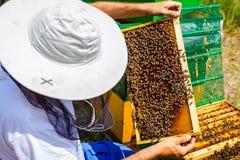 Το Apiarist, μελισσοκόμος ελέγχει τις μέλισσες στο κυψελωτό ξύλινο πλαίσιο Στοκ εικόνες με δικαίωμα ελεύθερης χρήσης