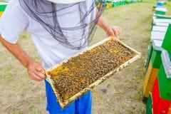 Το Apiarist, μελισσοκόμος κρατά τη χωρίς γάντια κηρήθρα με τις μέλισσες Στοκ Εικόνες