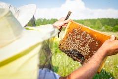 Το Apiarist, μελισσοκόμος κρατά τη χωρίς γάντια κηρήθρα με τις μέλισσες Στοκ Φωτογραφίες