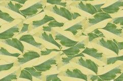 Το arboricola Schefflera αφήνει το υπόβαθρο σχεδίων Στοκ Εικόνες