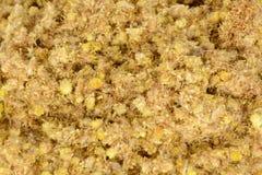 Το arenarium Helichrysum είναι επίσης γνωστό ως νάνος everlast, και ως Immortelle Στοκ Εικόνες