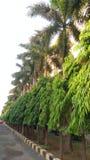 Το ashoka η καρύδα ν ο ουρανός στοκ φωτογραφία με δικαίωμα ελεύθερης χρήσης