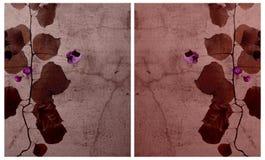 το bougainvillea ανασκόπησης ράγισε &t Στοκ Εικόνες