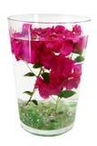 το bougainvillea προέρχεται ύδωρ Στοκ εικόνες με δικαίωμα ελεύθερης χρήσης