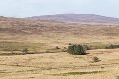 Το Brecon οδηγεί το εθνικό πάρκο στην Ουαλία, UK στοκ εικόνα με δικαίωμα ελεύθερης χρήσης