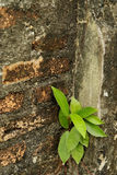 Το brickwall & το δέντρο 2 Στοκ Φωτογραφίες