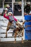 Το Bull δίνει στον κάουμποϋ έναν άγριο γύρο Στοκ Φωτογραφίες