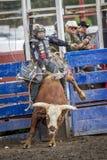 Το Bull δίνει τον άγριο γύρο Στοκ Εικόνες