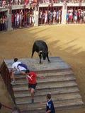 Το Bull στο χώρο Oropesa del χαλά Στοκ Φωτογραφία
