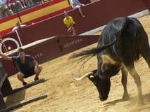 Το Bull στο χώρο Oropesa del χαλά Στοκ φωτογραφίες με δικαίωμα ελεύθερης χρήσης