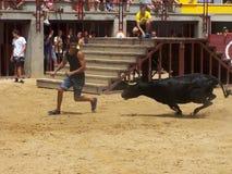 Το Bull στο χώρο Oropesa del χαλά Στοκ Φωτογραφίες