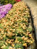 Το Butchart καλλιεργεί φράκτες Στοκ φωτογραφία με δικαίωμα ελεύθερης χρήσης