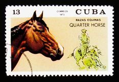 Το caballus ferus Equus αλόγων τετάρτων, άλογο αναπαράγει serie, circa το 1972 Στοκ φωτογραφίες με δικαίωμα ελεύθερης χρήσης