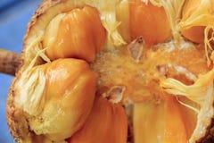 Το Cempedak ή Artocarpus ο ακέραιος αριθμός, είναι ίδιο γένος όπως jackfruit Στοκ Εικόνα