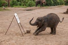 Το Chiang Mai, ελέφαντας στρατόπεδων κατάρτισης ελεφάντων της Ταϊλάνδης παρουσιάζει Στοκ φωτογραφίες με δικαίωμα ελεύθερης χρήσης