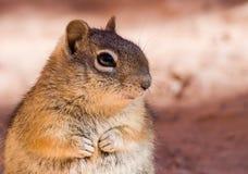 Το Chipmunk κάθεται στο βράχο Στοκ φωτογραφία με δικαίωμα ελεύθερης χρήσης