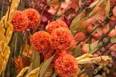 Το Colorfull ανθίζει την όμορφη floral άνθιση πετάλων άνοιξη κήπων ανθών Στοκ Φωτογραφίες