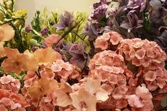 Το Colorfull ανθίζει την όμορφη floral άνθιση πετάλων άνοιξη κήπων ανθών Στοκ Εικόνες