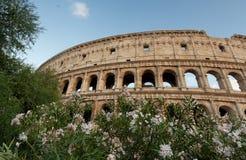 Το Colosseum που περιβάλλεται από τα δέντρα και τα λουλούδια Στοκ εικόνα με δικαίωμα ελεύθερης χρήσης